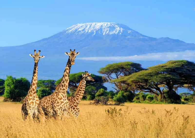 7 Days Kenya Luxury Tour Package